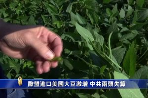 中共票倉戰術遇挫 美農業談判代表:農民們沒動搖