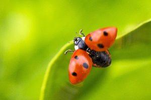 別亂摘葉子!美國科學家發現植物受傷也會痛