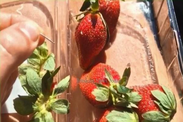 草莓惊现刺针 澳洲悬赏10万澳元缉凶