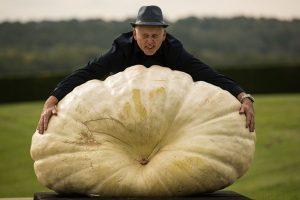 英國巨型蔬菜比賽 640斤南瓜讓人震驚 你敢吃嗎?