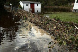 飓风佛罗伦斯引发洪灾 美东逾200万只鸡被淹死
