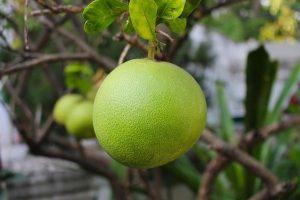 柚子皮妙用多!天然防蚊液自己做