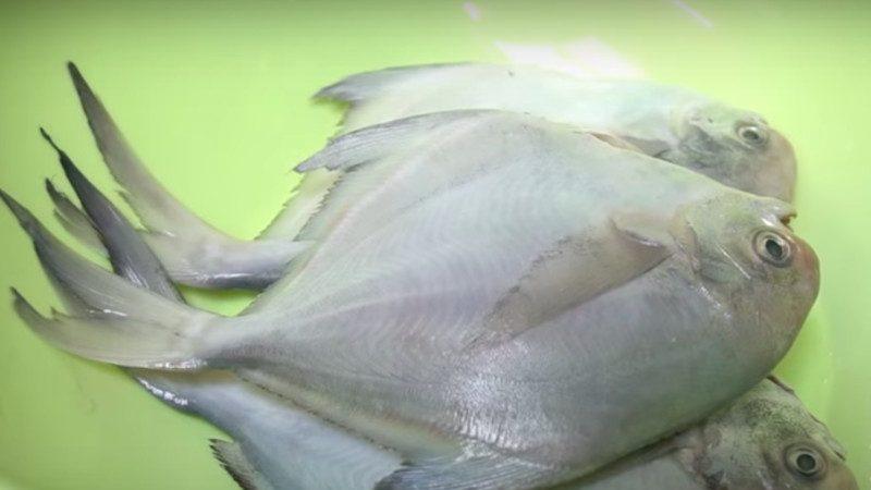 爱吃海鱼一定要收藏,试试这样做,嫩滑多汁又下饭,做法还简单
