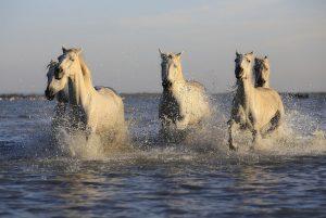佛家故事:釋迦牟尼論「四種馬」