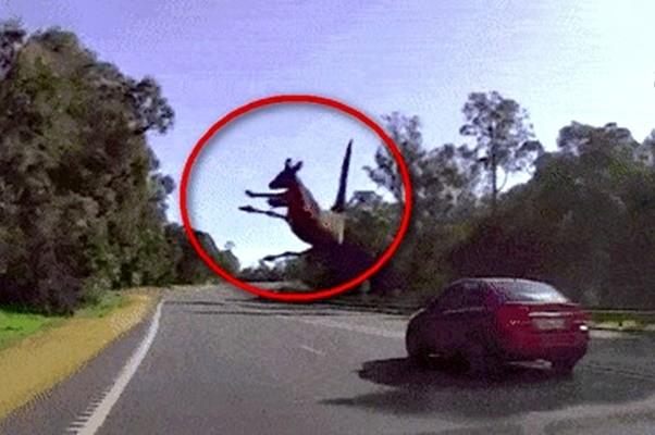 澳洲司機嚇壞!竟然有傢伙用「輕功」橫穿馬路
