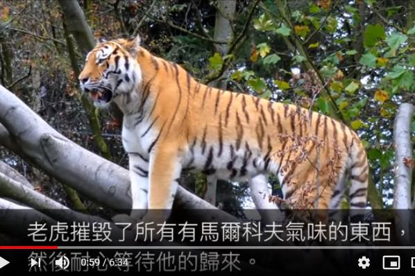 动物复仇人类的故事(视频)