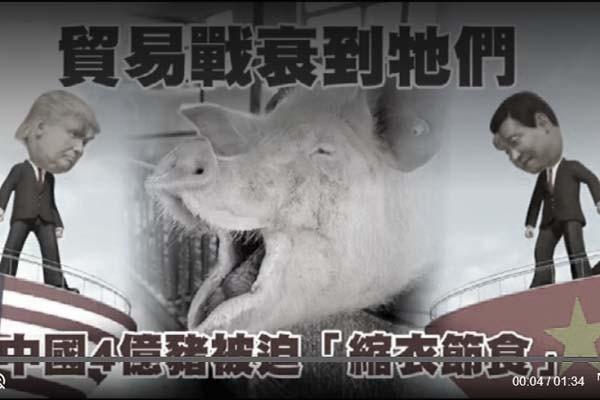 北京號召「共克時艱」 4億頭豬率先「節衣縮食」