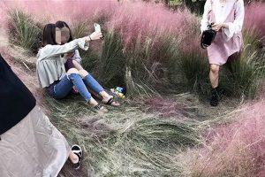 杭州粉黛草花田美景诱人 民众疯狂拍照践踏(视频)