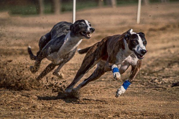 講人話的狗和馬──兩則轉世故事