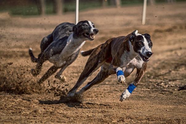 讲人话的狗和马──两则转世故事