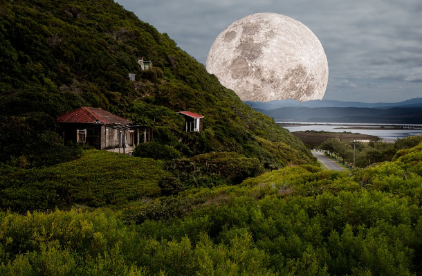 月亮裡的天丹樹