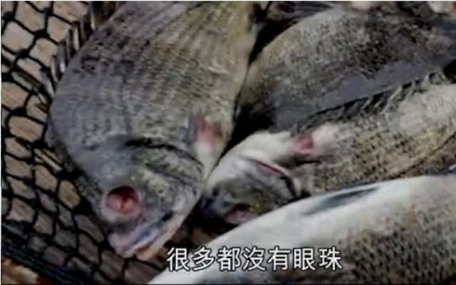 """福建碳九污染现恐怖""""生化鱼尸""""记者戴口罩报空气达标"""