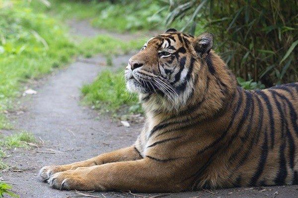 民间故事:老虎吃人 原来被它吃的人少了一样东西