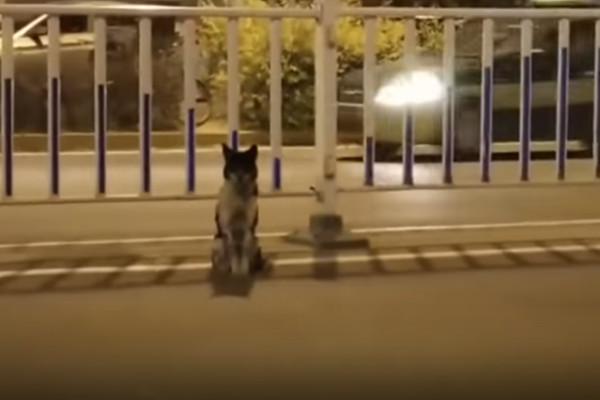 女主人车祸身亡 小狗路边等候80多天 风雨无阻(视频)