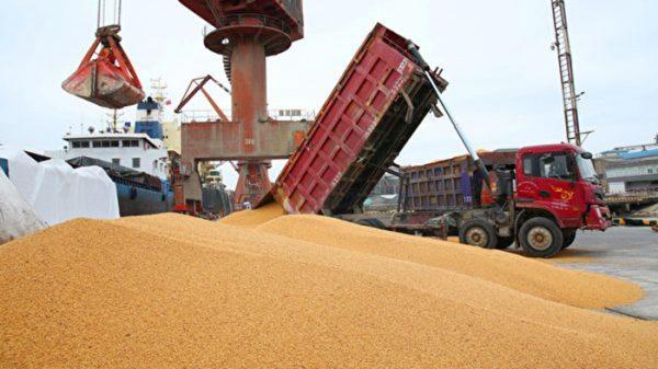 中共繳貿易談判「定金」 大買50萬公噸美國大豆