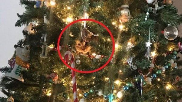 完美隐身!圣诞树里躲猫猫 您也来找找