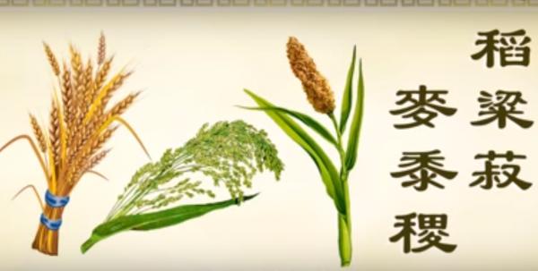 正見網 正統文化教材 動畫《三字經》第十單元 稻米的由來(視頻)