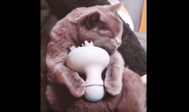 貓咪妙用按摩器 心滿意足的表情萌翻眾網友(視頻)