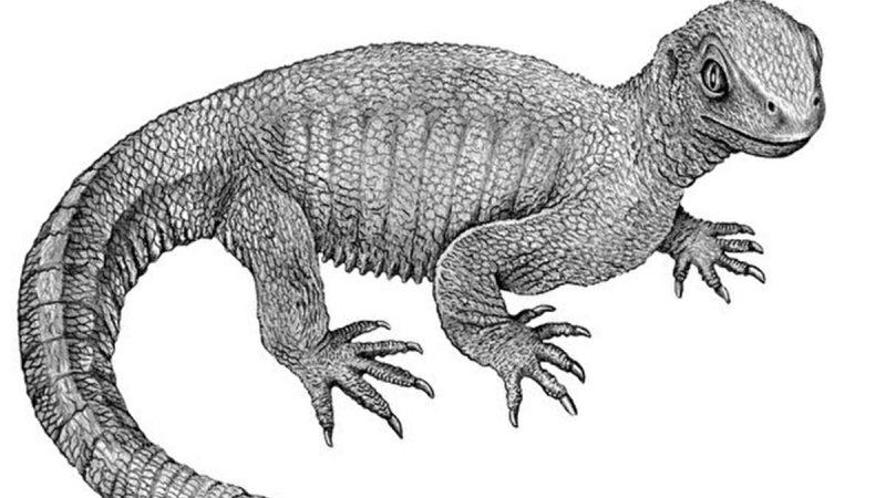 2.4億年化石上驚現罕見骨癌證據