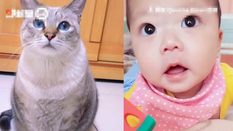 猫咪转世投胎为人 与女主人约定一记号(视频)