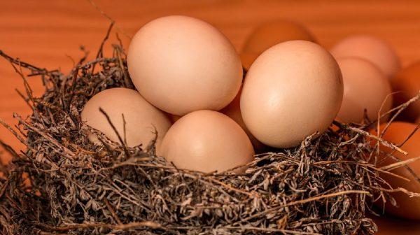 關於鷄蛋的事 新研究讓爭論戰火重燃