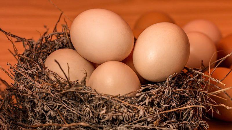 关于鸡蛋的事 新研究让争论战火重燃