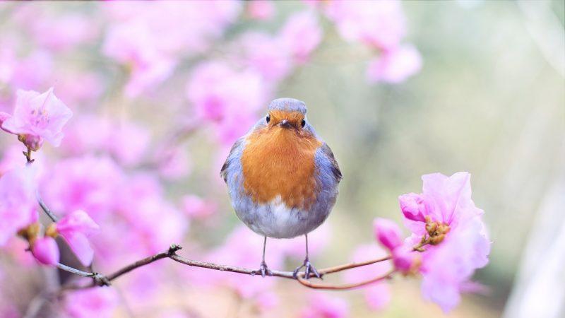春分风物新 养生解春困