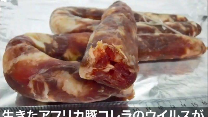 中国香肠被日本查出非洲猪瘟 是活体病毒
