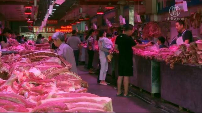美加对华猪肉出口大增 国内价格将上涨