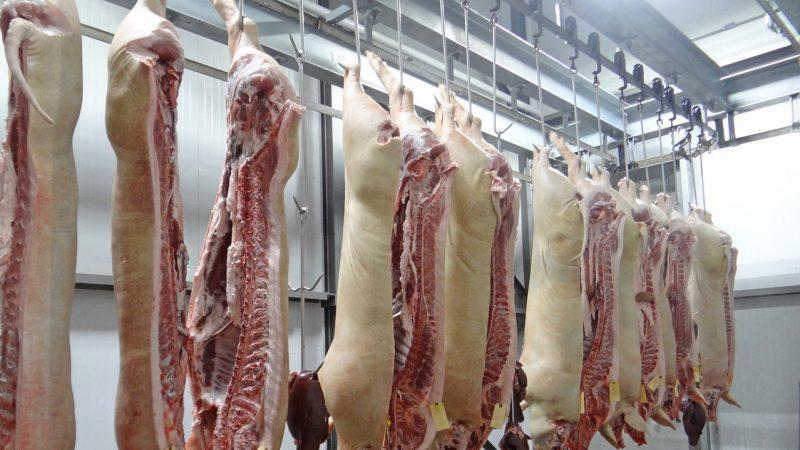 新疆爆发非洲猪瘟 只海南西藏未现疫情