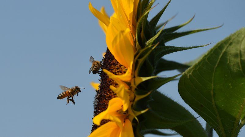 台湾女孩眼中飞入4只蜜蜂 取出仍活着
