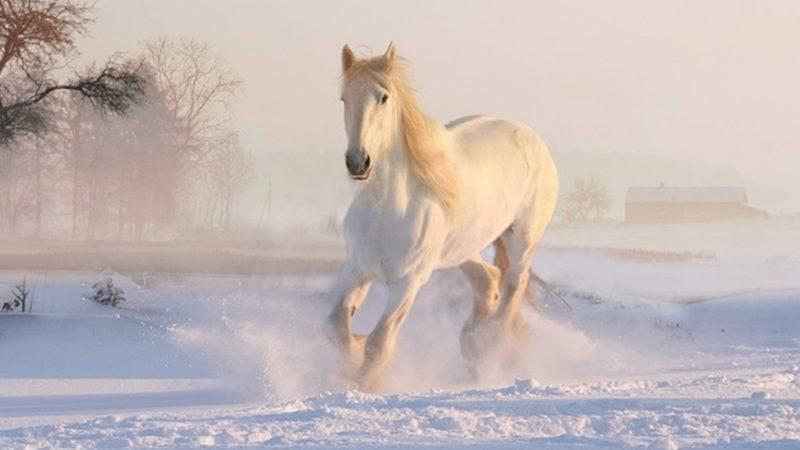 吃同样的苦白龙马飞升驴下地狱只因选择不同!