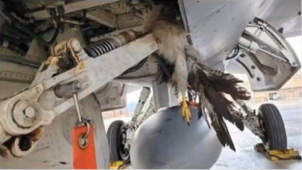 起飛遭鳥擊 美F-35戰機估損失逾200萬美元