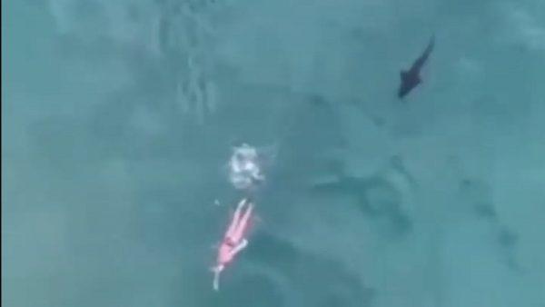 胆战心惊 无人机拍下鲨鱼紧追女泳客
