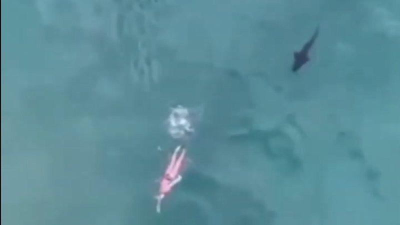 膽戰心驚 無人機拍下鯊魚緊追女泳客