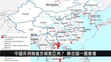中国一分钟:中国非洲猪瘟怎祸害亚洲?联合国一图看懂