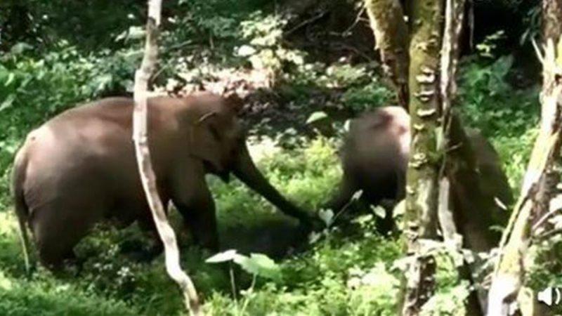 大陸女遊客保護區帶孩子小便 遭大象狠踹一腳