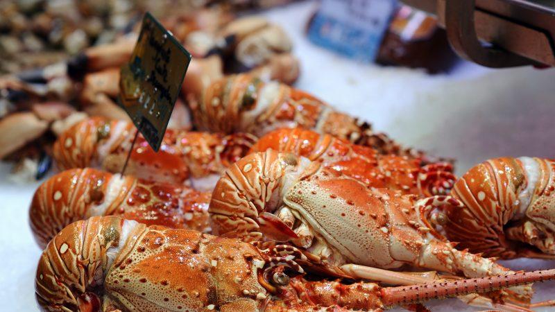 龙虾季推后 加国渔民忧中共禁令