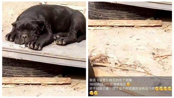"""给狗取名""""城管""""  安徽男被拘10天"""