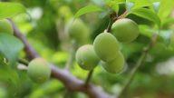梅雨时节耕种忙 芒种时的传统习俗