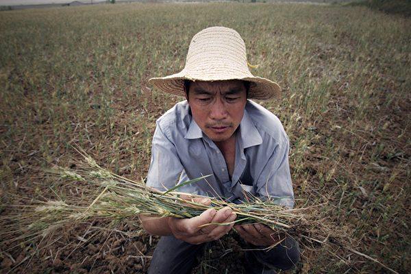 文武:中共的粮食危机