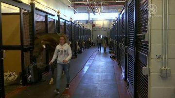 JFK動物航站樓 開張2年後部分設施仍未用