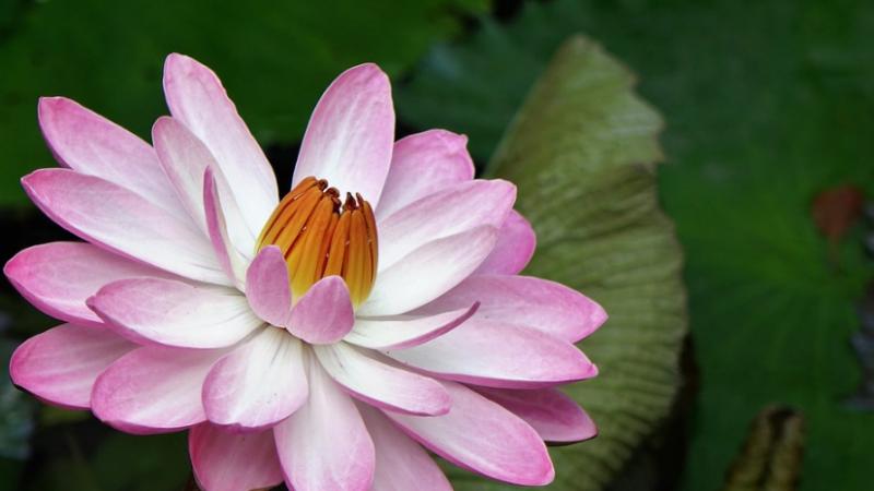 中華傳統美德故事(孝篇)之四:曾參養志