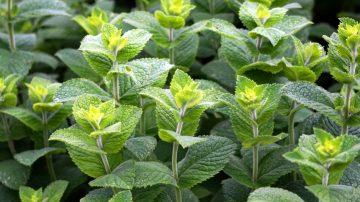 室内空气比室外还要脏?养这些植物 可改善家中80%空气品质(视频)