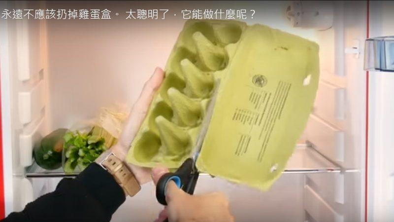 不應扔掉雞蛋盒 它能做什麼呢?(視頻)