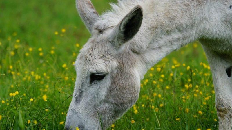 神话传奇:倒骑驴的张果老