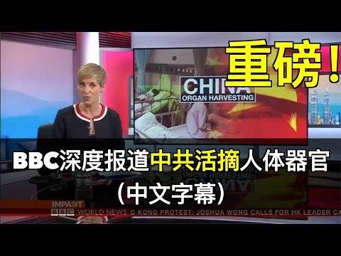 重磅!BBC深度报道(节录)中共活摘人体器官(中文字幕)