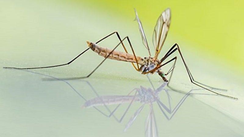 被蚊子咬又疼又癢?9招止癢絕技要記住(組圖)
