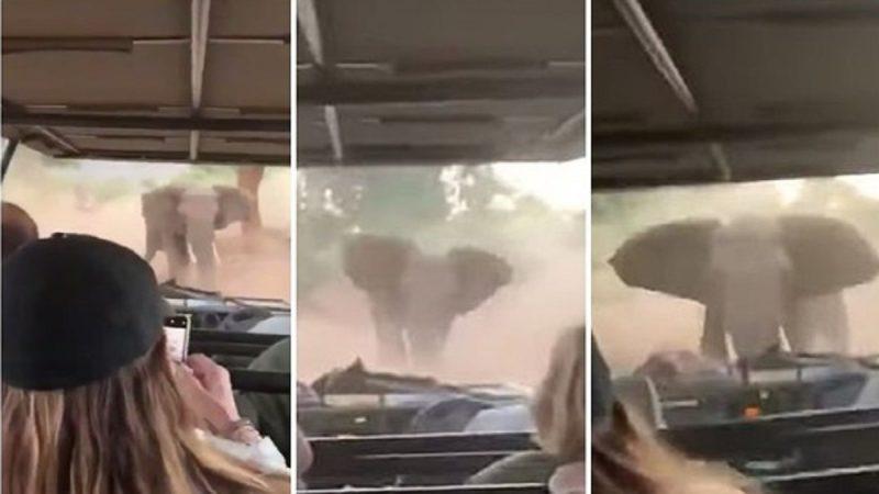 大象怒冲吉普车 司机淡定迂回倒车脱险
