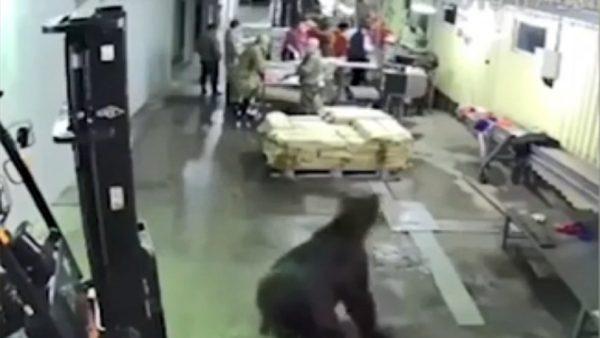 """""""不速之客""""闯工厂觅食 下一秒!全部""""鸟兽散"""""""